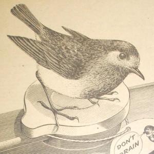 1956 Bluecol Robin Logo