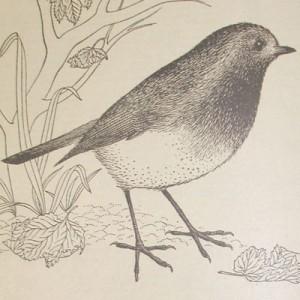 1957 Bluecol Robin Logo